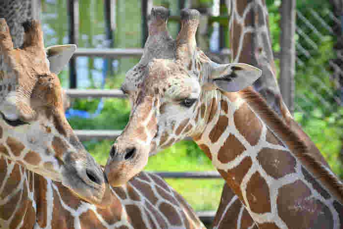 動物園は、無邪気な気持ちで過ごせるスポット。動物たちの愛らしい姿に心が和みます。そういえば大人になってからは行っていないかも、という人はぜひ足を運んでみてください。