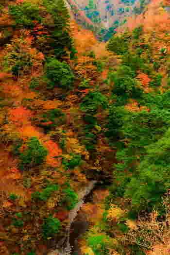 寸又峡は、秋になると峡谷は見事な紅葉に包まれ、まるで錦をまとったかのような姿へと変貌します。