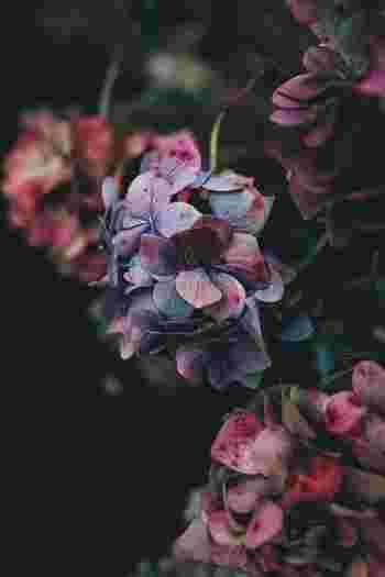 小さな花がたくさんついている花に最適なドライインウォーター法。あじさいにもこの方法が最適です。花瓶に1~1.5cmなど少しだけ水を入れて室内の風通しの良い場所に放置でOKです♪
