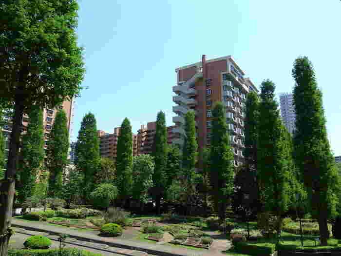 緑と住宅が広がる光が丘。団地が広がっている。