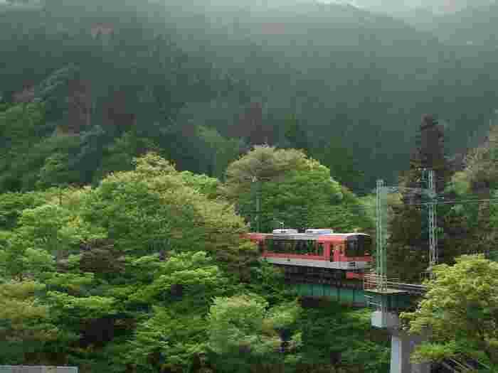 緑のグラデーションに包み込まれるように、叡山電車は走ります。