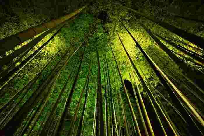 境内には竹林も。夏は涼しく、ライトアップ時も幻想的で素敵。
