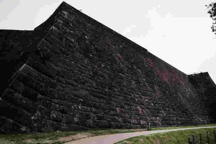 本丸北壁の石垣は、全長が約179mで一番高いところで17m、傾斜が約70度の急勾配で、見上げると圧倒されるほどの迫力があります。