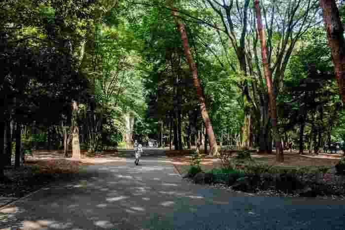 駅から徒歩15分ほどの場所にある「林試の森公園」。デイキャンプができるので、友達を呼んだときは公園でバーベキューをしたり、キャンプギアを使って簡単なアウトドア料理に挑戦したり。都会に近いけれど気軽にアウトドアも楽しめる、自然が好きな人におすすめの環境です!