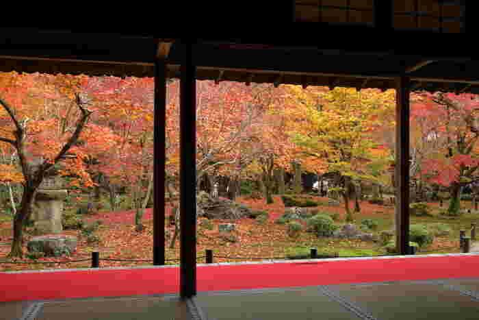 圓光寺は、叡山電鉄「一乗寺駅」から徒歩約15分。池泉回遊式庭園は「額縁庭園」として人気があり、紅葉の見所になっています。本堂前には水琴窟が置かれていて、心休まる音を聞くこともできます。