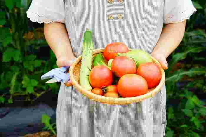 ベランダ菜園初心者さんへ♪手に入りにくい野菜も意外と簡単に作れるんです!
