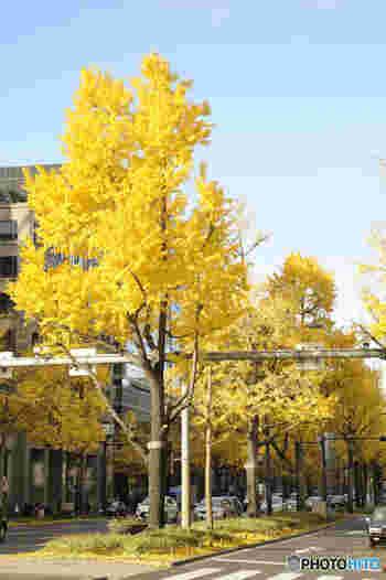 御堂筋とは、大阪市中心部の北部の玄関口「梅田」と南部の玄関口「難波」を結ぶ全長約4キロメートルの道路です。幅約43.6メートルの道路沿いにはイチョウの木が植樹されており、「日本の道100選」の一つに数えられています。