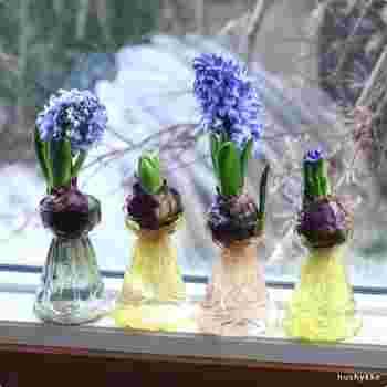 ひとつひとつ丁寧に吹きガラスで作られた球根ポットのカラーは全4色。画像左から、オリーブ、アンバー、ティー 、グリーン。どれも魅力的で全て揃えて並べても絵になります。