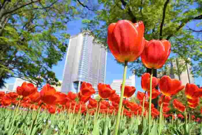 1903年に開園された日比谷公園は、霞が関や有楽町に隣接しており、東京都中心部にある公園です。広大な敷地とには豊かな緑が生い茂っており日比谷公園は、都会のオアシスのような場所です。