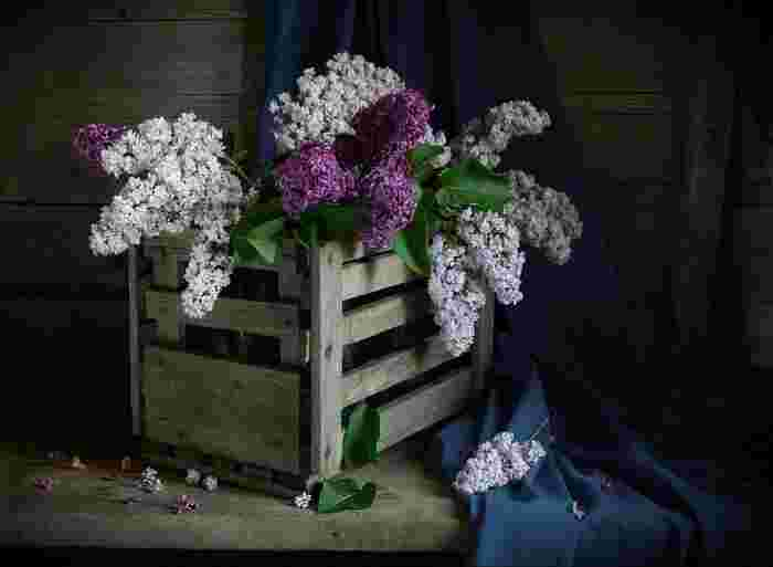 Photo on [VisualHunt](https://visualhunt.com/re4/9731f6c1)  香水の原料に使われることもあるライラック。初夏に白色の花を美しく咲かせます。実はピーク時には様々な種類のライラックを楽しめますが、いつも流通しているわけではありません。もし見つけたらぜひ手に入れてお部屋に飾りたいですね。