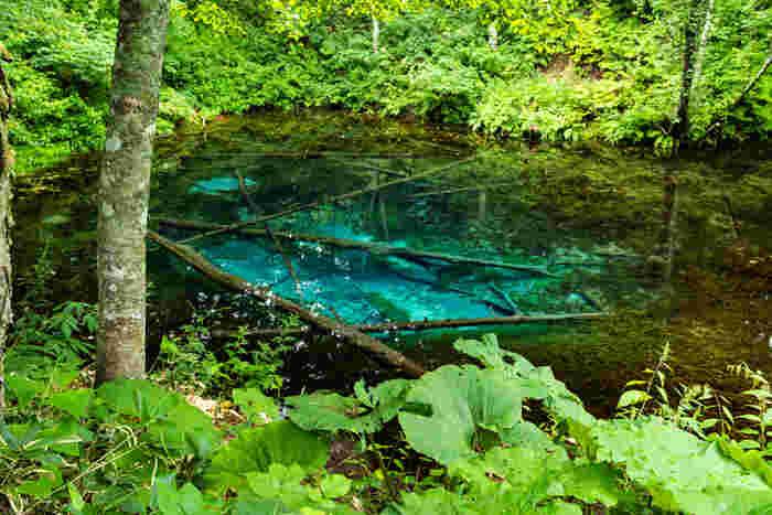 摩周湖の北東に位置する水深5メートルの神の子池は、池の底まが見えるほどの抜群の透明度と水中に沈んでいる倒木が作り出している独特の景観美が魅力的な池です。池の規模はそれほど大きくはないものの、森の中にひっそりと佇む神の子池は、どこか神秘的な雰囲気を醸し出しており、訪れる人々を魅了してやみません。