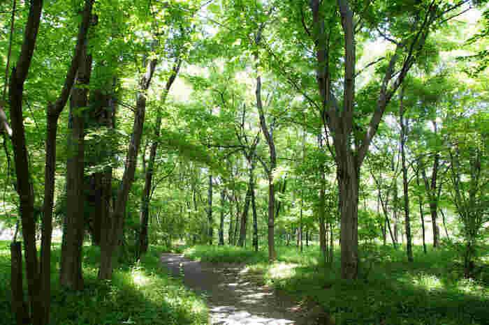 「皇居東御苑」の最大魅力は、水を湛え、木々深い、豊かな自然環境であること。 【初夏の頃の苑内「二の丸雑木林」(6月上旬撮影)】