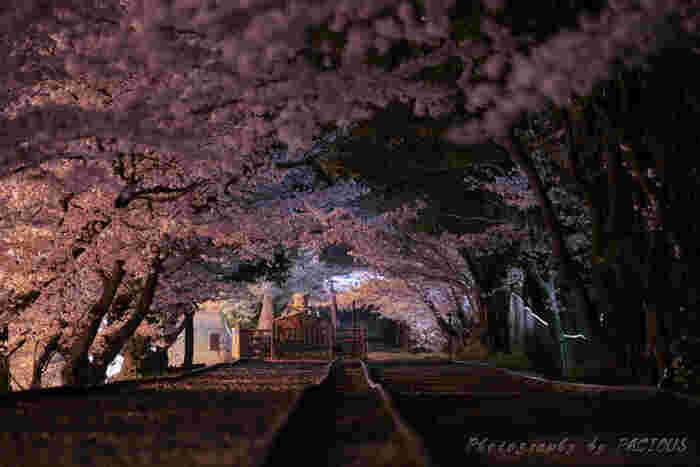 夜になると道路側のライトアップに照らされて、幻想的な雰囲気に。足元には十分気をつけて訪れてみてくださいね。