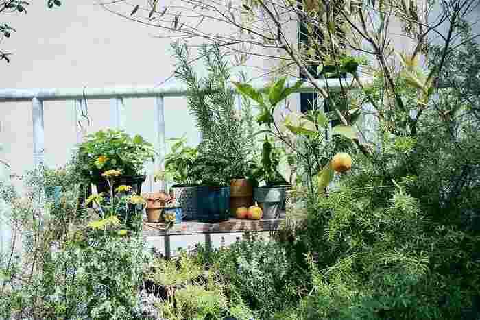 せっかく庭づくりやガーデニングを楽しむなら、食べられる種類もいくつか植えてみましょう。ハーブ系はもちろん、レモンなどの柑橘類もおすすめです。
