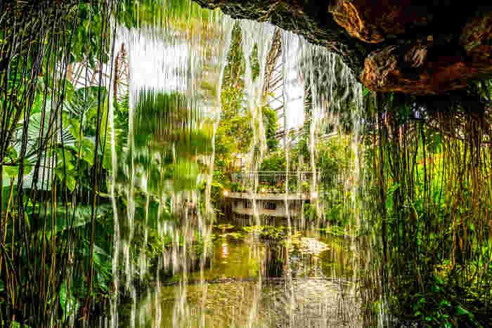 中には滝を再現した空間も。水と緑に囲まれた癒しスポットは、「都会のオアシス」という言葉がぴったりですね。ドーム内の池や植物を見ながら休憩できる、持ち込みOKのカフェも大人気です。