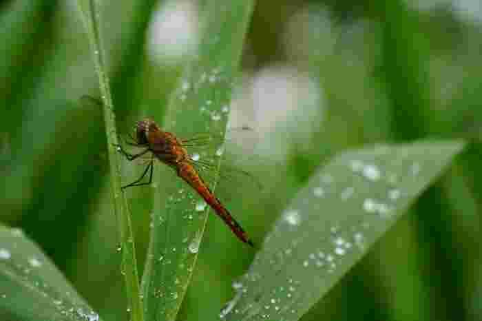 豊かな自然に包まれた「仙石原」で一時を過ごせば、自然と同調して、日頃のストレスや疲れが押し流され、本来の清々しい自分自身にリセット出来ます。【7月上旬頃の「箱根湿生花園」】