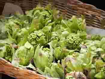 春といえば山菜。その独特の苦味と香りが季節を感じさせてくれます。今回は、「ふきのとう」「タラの芽」「ウド」「ワラビ」「こごみ」の5種類の山菜のレシピをご紹介♪気軽にできるものばかりなので、ぜひ参考にしてみてください。