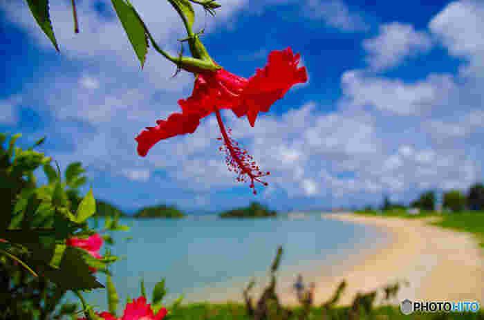 サンゴ礁に囲まれた海、緑いっぱいの山々、あふれる自然と独自の文化が人気のリゾート地・沖縄は、一年を通して、多くの観光客でにぎわっています。今回は、たくさんの観光客が訪れる沖縄で「のんびり海を眺められる」おしゃれなカフェをご紹介します♪