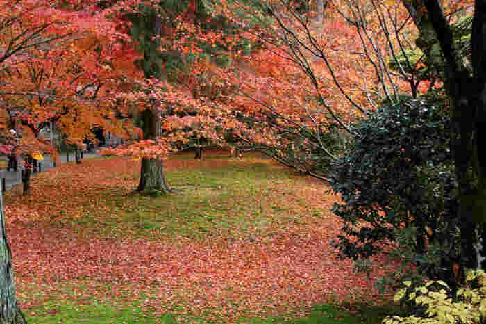 庭園に敷き詰められた青苔に、舞い散った楓の落ち葉が折り重なる様は、まるで着物の染柄のような美しさです。