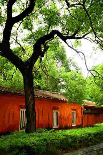 真っ赤な壁と緑のコントラストが美しい孔子廟。写真に収めたくなるスポットがたくさん見つかりますよ。
