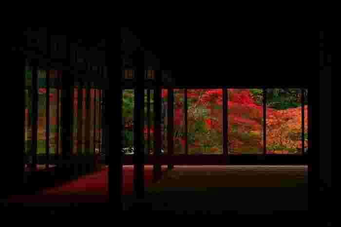 特に素晴らしいのは、「方丈前庭」と「書院南庭」。紅葉時の「書院南庭」は得も言われぬ美しさです。 【11月中旬の「書院南庭」】