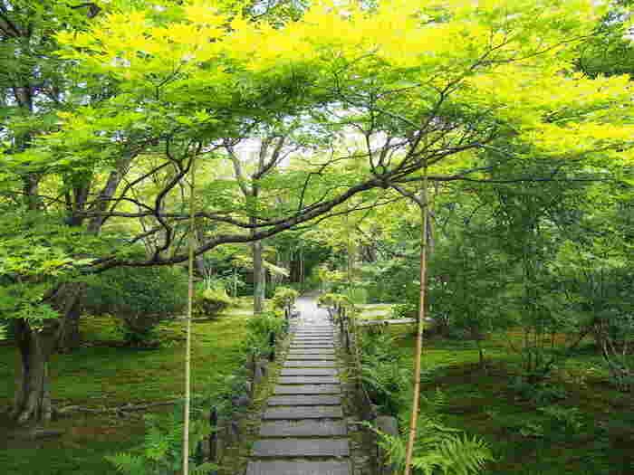 紅葉の名所として名高い宝筐院。平安時代に白河天皇の勅願寺として建てられたお寺です。境内は奥行きがあり、静ひつな青もみじの世界をゆったりと堪能できます。本堂から眺める庭園の美しさも名高く、四季の花々を見ることができます。