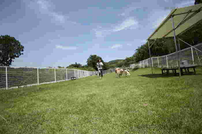芝生が敷き詰められたドッグランで好きなだけ愛犬を遊ばせることができます。雨の日や愛犬の熱中症が気になる場合は、約77畳もの広さの屋内ドッグランでも遊べますよ。