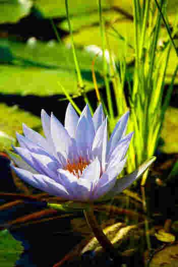1年を通して多種多様な花が見られるのも魅力。はっと目を見張るような鮮やかな色合いや、ダイナミックに伸びる枝に生命力を感じるはず。