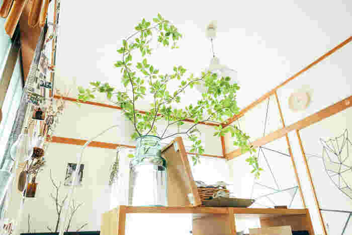 「枝もの」で部屋を彩る。グリーンのある暮らしを始めよう