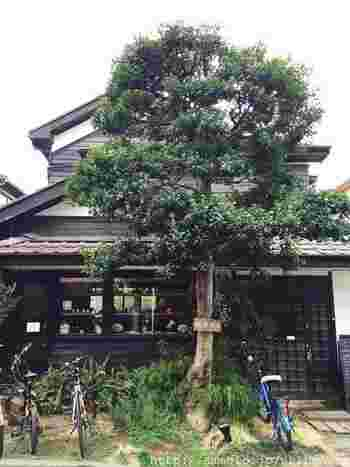 大きな木が目印の「松庵文庫」は西荻窪駅から徒歩約7分、築80年の古民家を改装して作られたブックカフェ&ギャラリーです。