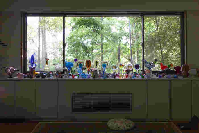 平井さんが所有するバードコレクションを並べて。スコープアパートメントの象徴ともいえる圧巻の景色(写真提供:scope)