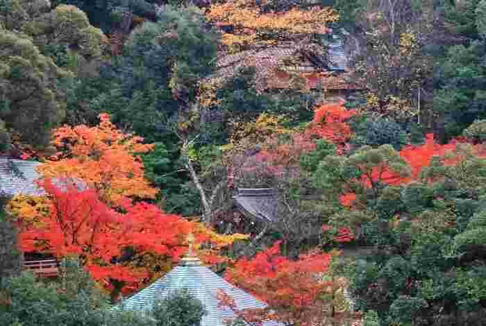 すべての客室から薬王院温泉寺の日本庭園が一望できるほか、天然無垢の桐を敷き詰めた床は全国でも唯一。