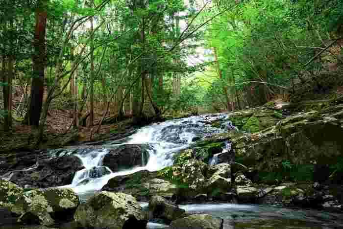 るり渓は高原となっているため、夏でも比較的過ごしやすく、森林浴スポットとして最適です。清流のせせらぎに耳を澄ませながら、深緑の葉をつけた樹々を眺めて歩く気持ち良さは格別です。