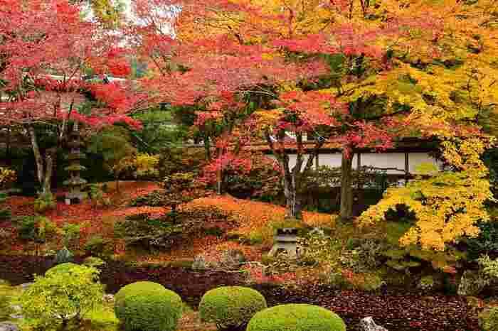 泉涌寺(せんにゅうじ)の御座所庭園の紅葉はとても美しく見応えがあります。境内にはあまり紅葉がないので庭園を見て心が湧きたつかもしれません。近くにある東福寺ほど混雑していないので比較的ゆったりと見ることができるのも魅力の1つです。