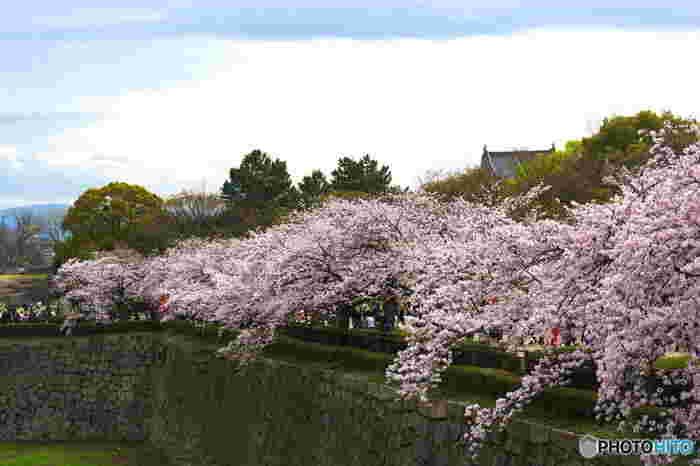 写真は大阪城、空堀沿いの桜並木。