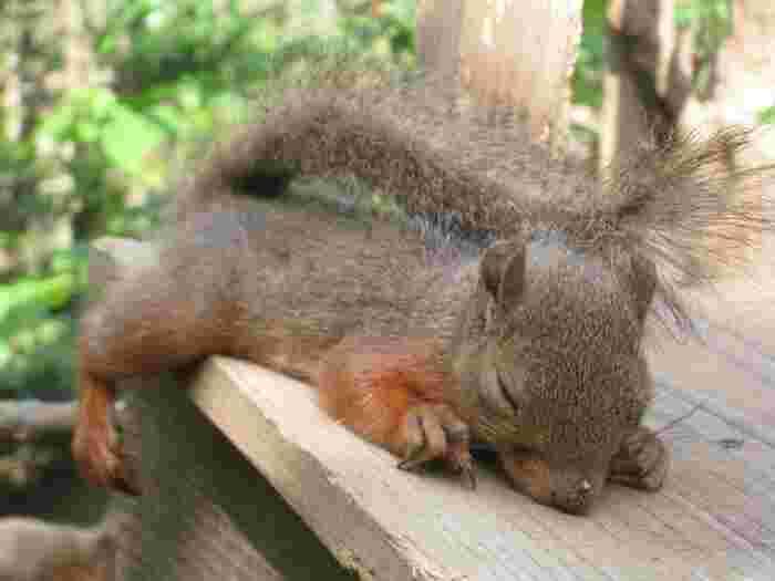 活発な姿もいいですが、スヤスヤお昼寝姿にも癒されますね。
