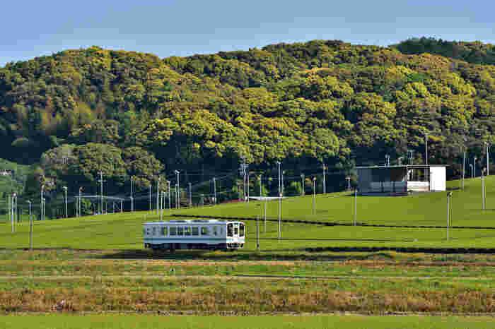 天浜線ワイン列車は、「昼の部」と「夕の部」の2回運行。どちらも所要時間は約2時間で、代金にはお食事代とボジョレーヌーボー代などが含まれます。ソムリエによる解説を聞きながらボジョレーヌーボーを楽しむことができるそう♪  日時:平成29年11月18日(土)  *写真はイメージです