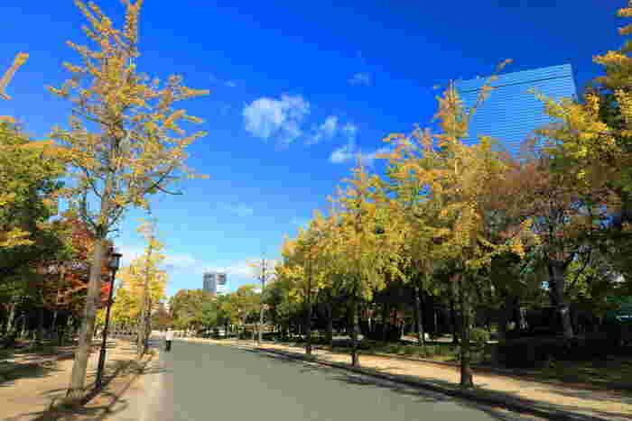 ここは、高層ビルが林立する大阪市内に立地しているものの敷地内には多くの樹木が植栽されており、緑豊かな都会のオアシスのような存在です。