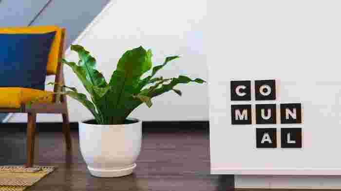 天井が低いお部屋の場合は、床に観葉植物を置くのも良いでしょう。