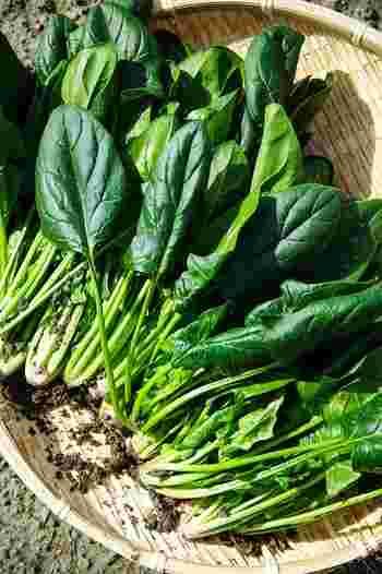 緑黄色野菜の「緑」代表とも言えるほうれん草。ビタミン類、ミネラルなどどれをとっても非常に栄養価が高く、中でも冬場のほうれん草は他の季節のものと比べると、ビタミン量が約3倍!免疫力を高め、風邪や感染症の予防に期待できるほか、口内炎を予防する効果もあります。