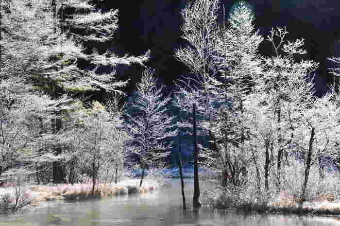 年間を通じて美しい景色を見せてくれる田代池ですが、雪化粧をした田代池の美しさは格別です。氷点下でも凍結しない冬の田代池を眺めていると、映画「アナと雪の女王」のワンシーンに入り込んだような錯覚を感じます。