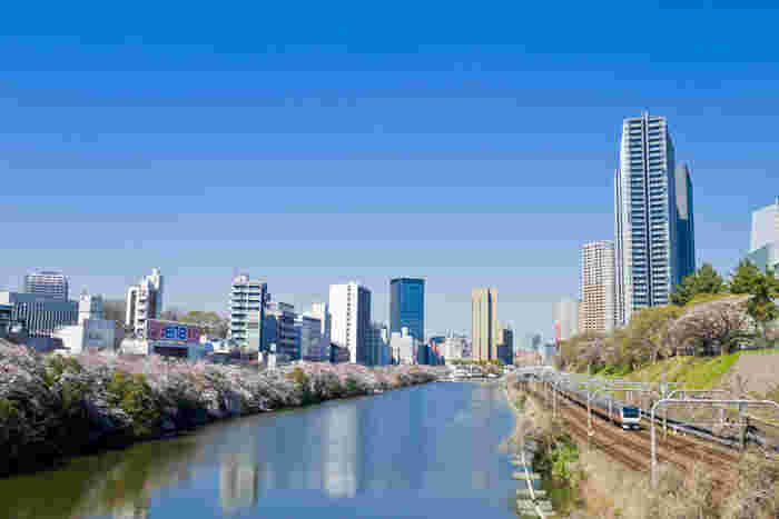 外濠公園は、江戸城の外濠土手とお濠の跡地を利用して造られた公園です。この公園は、車道よりも高い場所に立地している遊歩道となっているため、ゆっくりと散策しながら桜鑑賞を楽しむことができます。