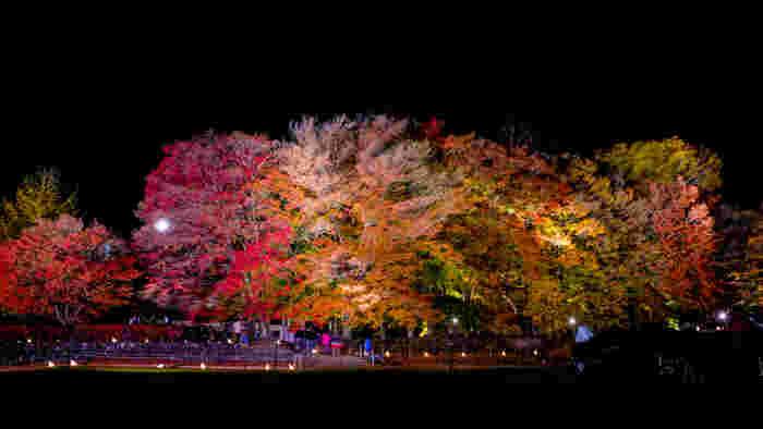 これからの季節は、紅葉や夜景も楽しめる富士五湖。それぞれの特徴とおすすめポイント、そして周辺グルメや温泉、素敵なお宿をご紹介します。