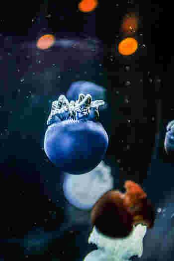 東南アジア周辺の魚などを展示したミニ水族館も見どころのひとつ。中でもカラージェリーフィッシュは必見です!体の中に共生している藻の状態によって、青・赤・白・緑などに色が変化するといわれている、不思議なクラゲ。ふわふわ水を漂う美しい色のクラゲは、見ているだけで癒されます。