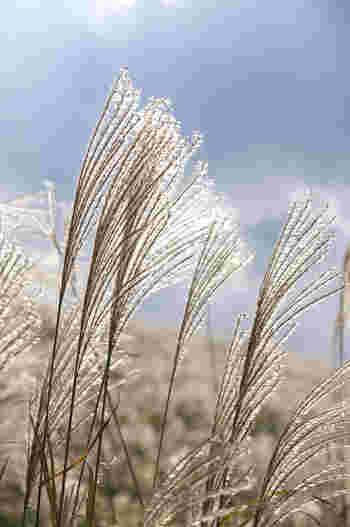 古に想いをはせて。関東エリア「秋の七草」を探しに出かけましょう♪