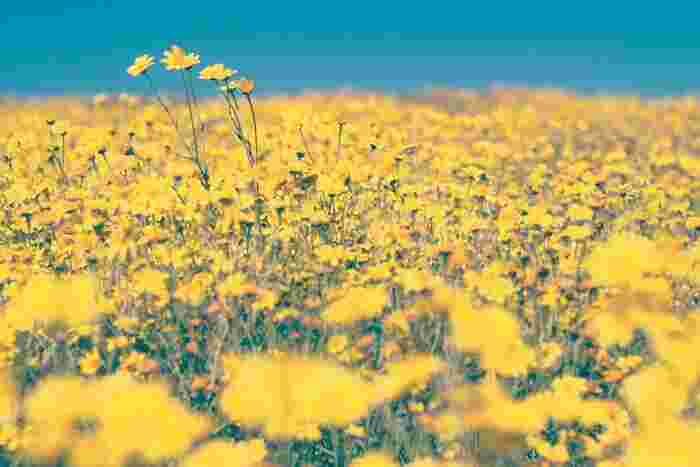 花や自然に癒されて*ガーデン風景が美しい「花」が印象的な映画