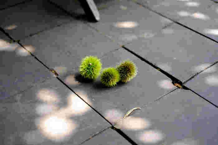 小布施のあちこちに広がる栗の小径。栗の木の間伐材が敷き詰められ、木の柔らかさと温かみを歩きながら感じられます。脇には栗木も植えられ、栗の実が落ちていることも♪栗の町を象徴する暖かいムードを醸し出しています。