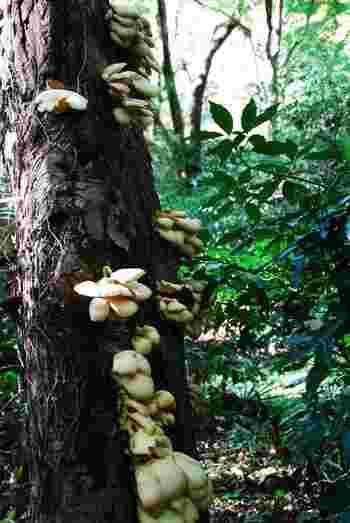 森の中を探してみてください♪珍しいキノコに出会うこともできますよ。