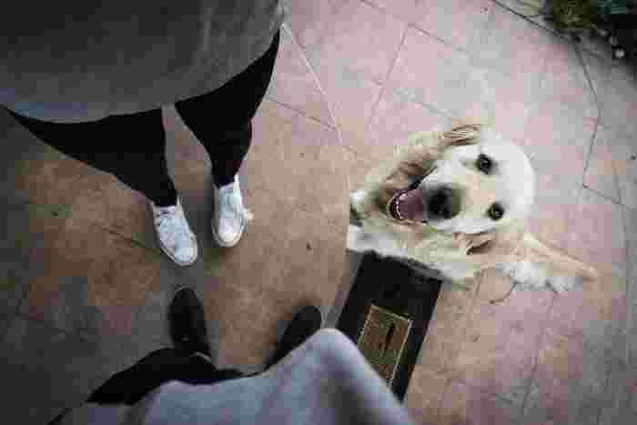 「家族の大切さ」 それまでは当たり前だと思っていた家族も、犬という新しい家族が現れることでその大切さに改めて気づかされる人も多いようです。まっすぐな瞳で信頼を寄せてくれる犬は、いつしかなくてはならない存在に。愛情や感謝の気持ちを伝えてあげましょう。