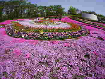 「彩のひろば」と呼ばれるスペースには、季節ごとに10万株の花々が咲き誇ります。お手入れの行き届いた花壇からは、お花の香りがふわりと広がります。